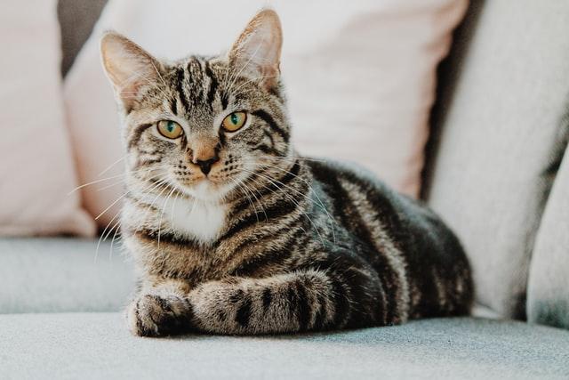哲学する猫